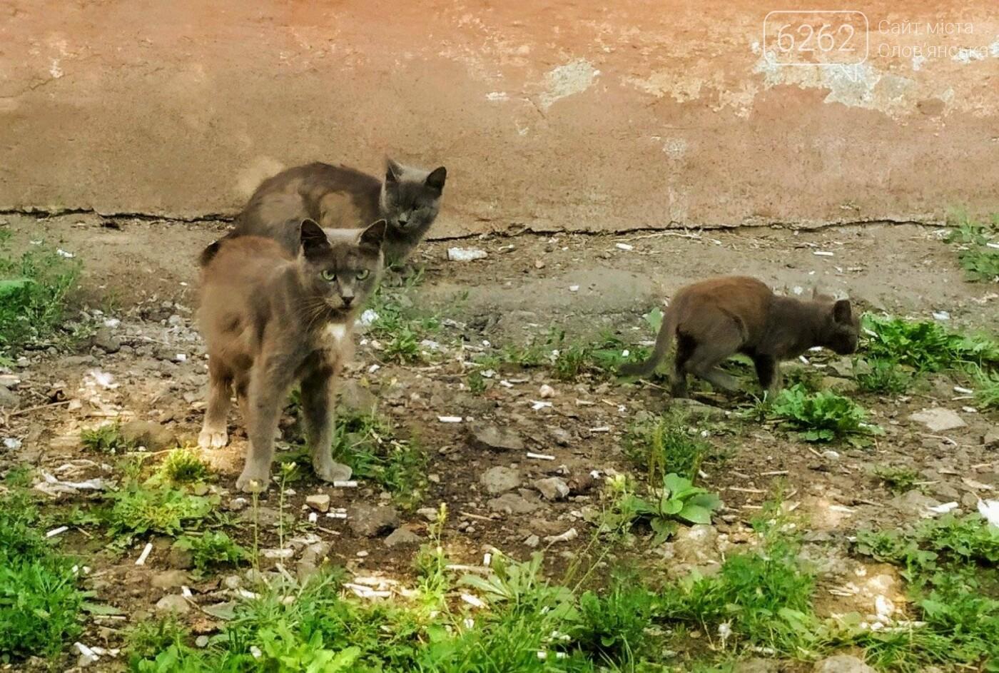 Уличные котики нашего города (фотоподборка) , фото-1
