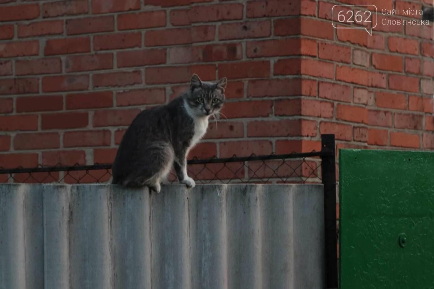 Уличные котики нашего города (фотоподборка) , фото-3