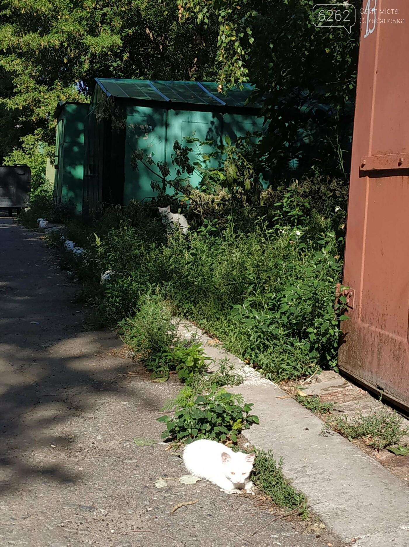 Уличные котики нашего города (фотоподборка) , фото-4