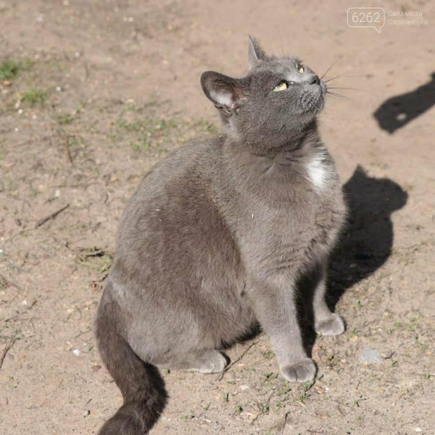 Уличные котики нашего города (фотоподборка) , фото-6