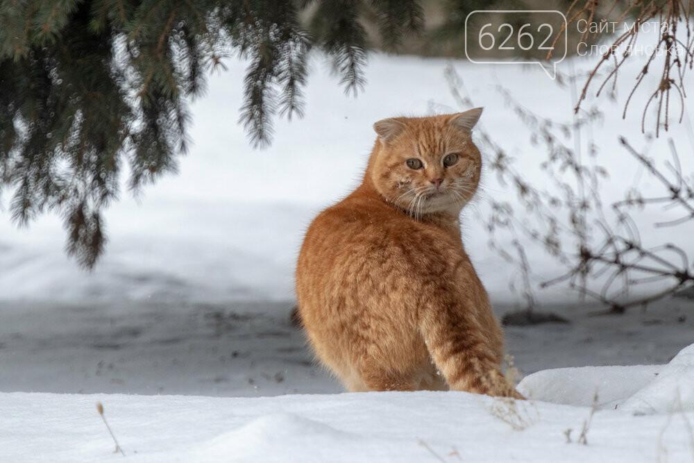 Уличные котики нашего города (фотоподборка) , фото-7