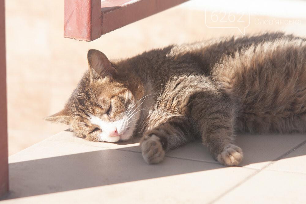 Уличные котики нашего города (фотоподборка) , фото-8