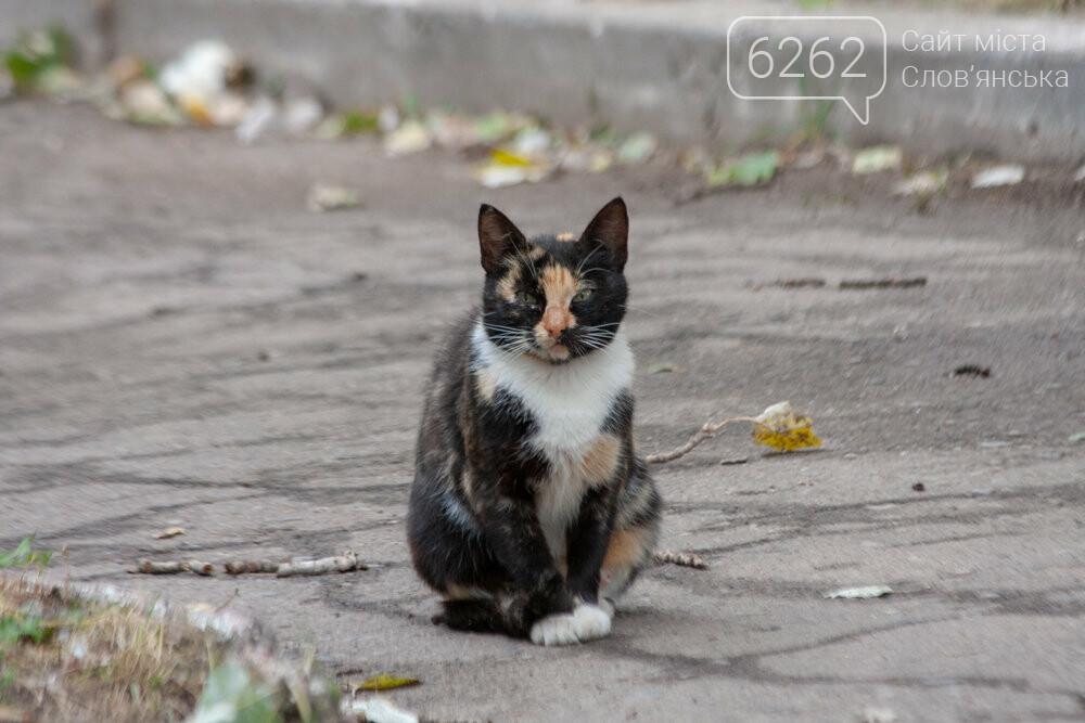 Уличные котики нашего города (фотоподборка) , фото-10