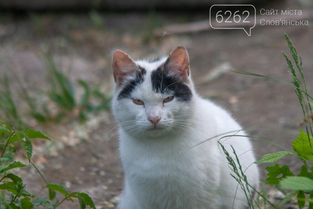Уличные котики нашего города (фотоподборка) , фото-11