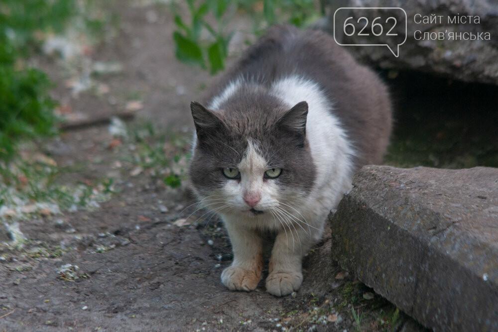 Уличные котики нашего города (фотоподборка) , фото-12