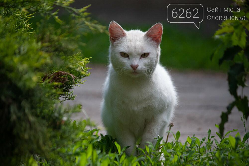 Уличные котики нашего города (фотоподборка) , фото-13