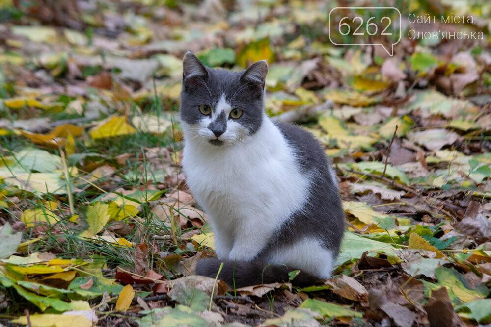 Уличные котики нашего города (фотоподборка) , фото-15