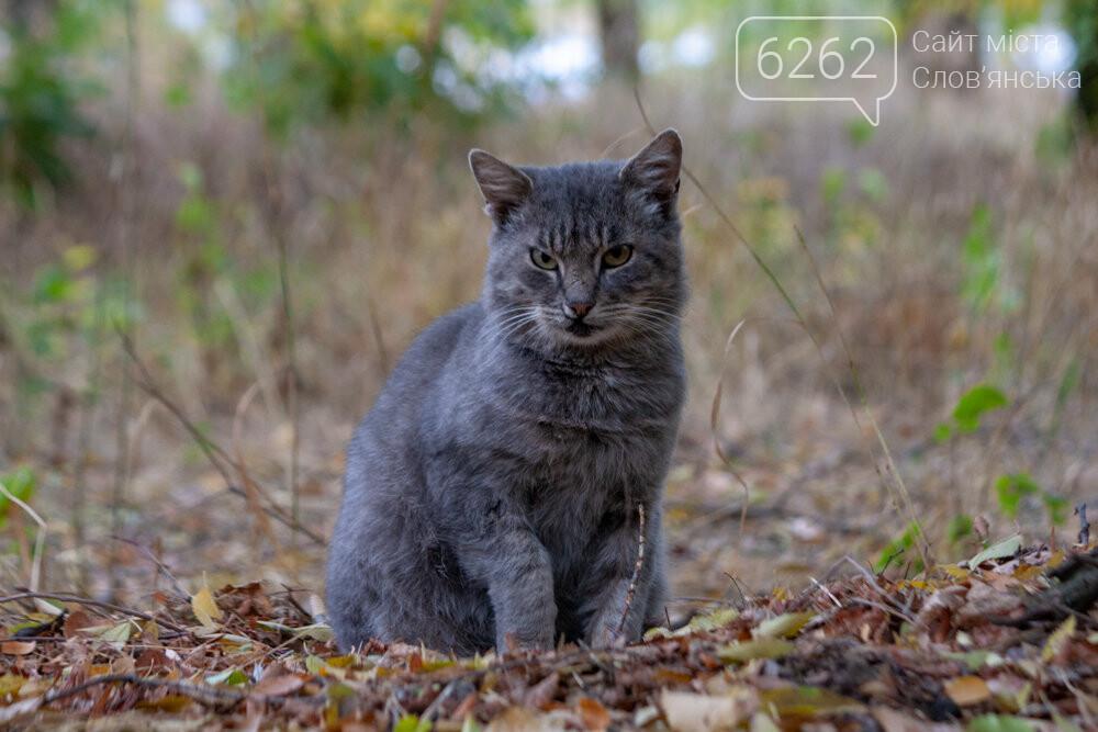 Уличные котики нашего города (фотоподборка) , фото-17