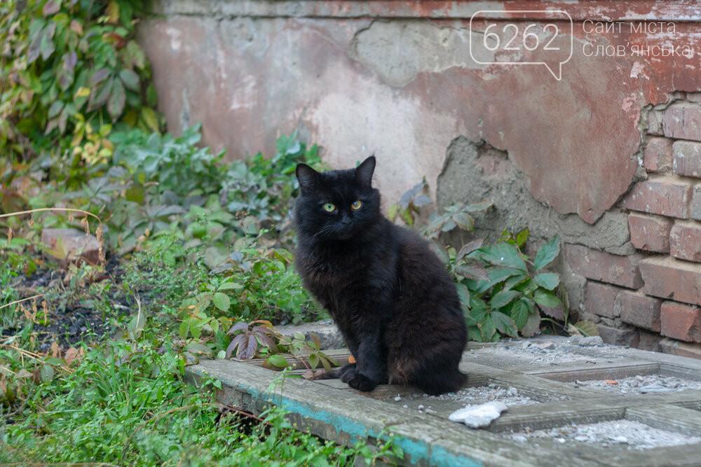 Уличные котики нашего города (фотоподборка) , фото-18