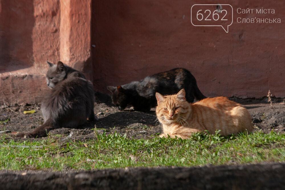 Уличные котики нашего города (фотоподборка) , фото-19