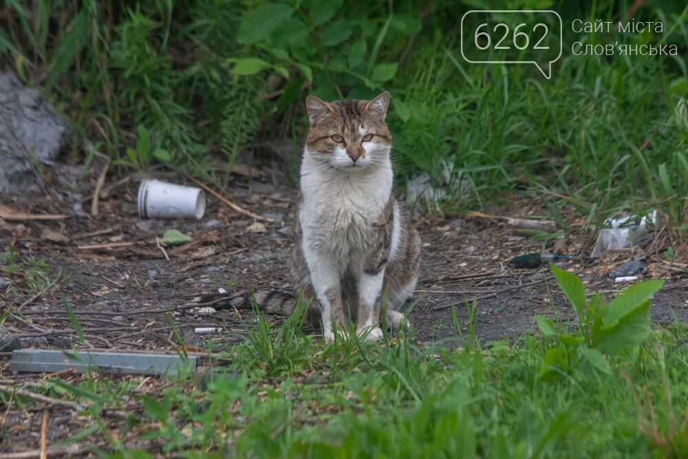 Уличные котики нашего города (фотоподборка) , фото-21