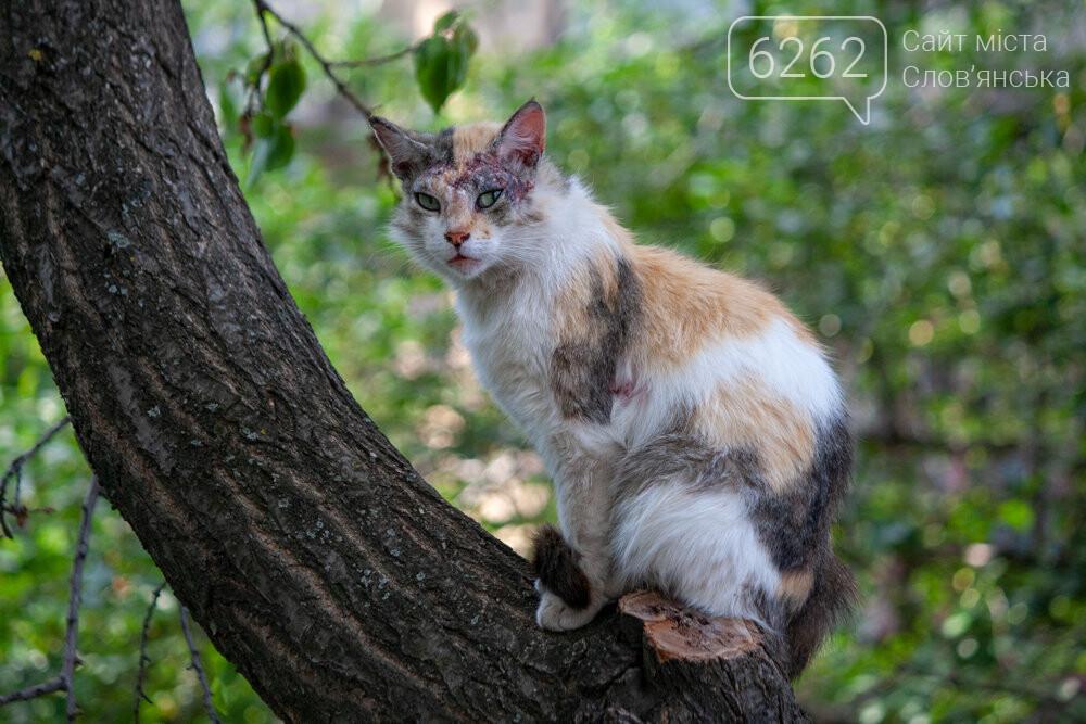 Уличные котики нашего города (фотоподборка) , фото-24