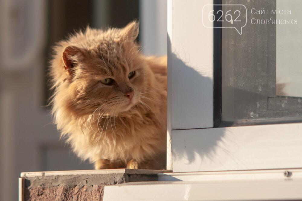 Уличные котики нашего города (фотоподборка) , фото-27