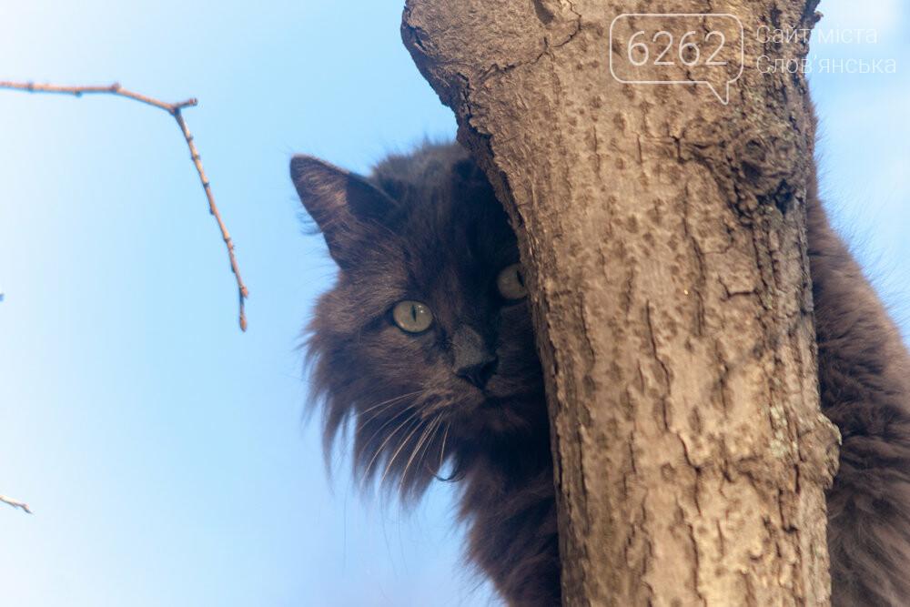 Уличные котики нашего города (фотоподборка) , фото-28