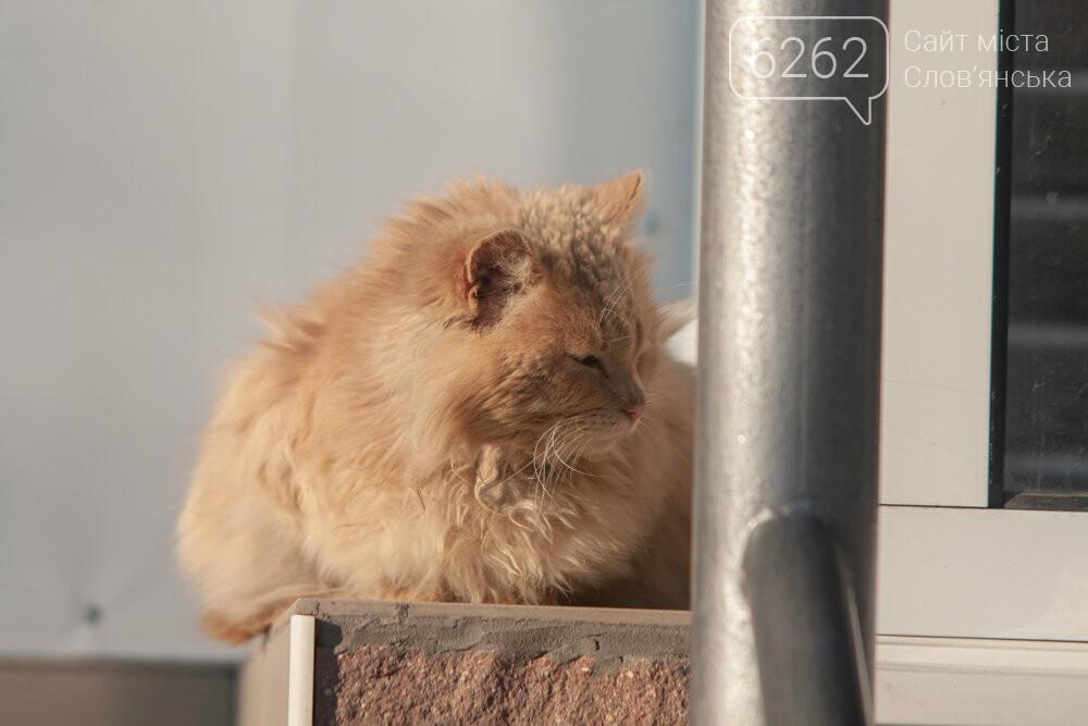 Уличные котики нашего города (фотоподборка) , фото-29