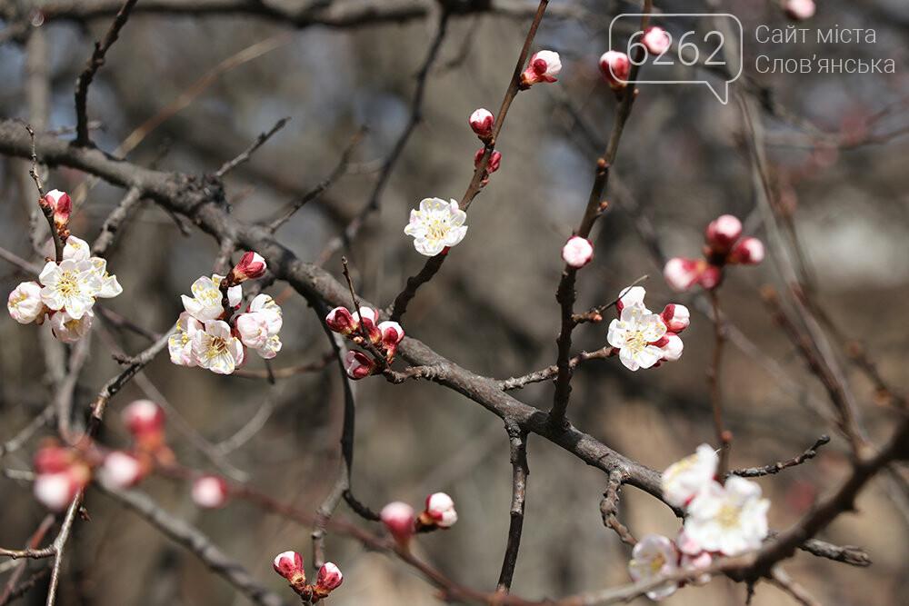 У Слов'янську прокидається природа (фото), фото-5