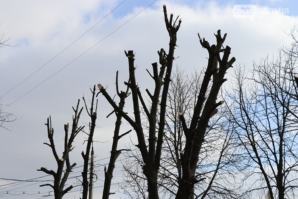 Весна близько. У Слов'янську взялись за обрізку дерев (фотофакт) , фото-5