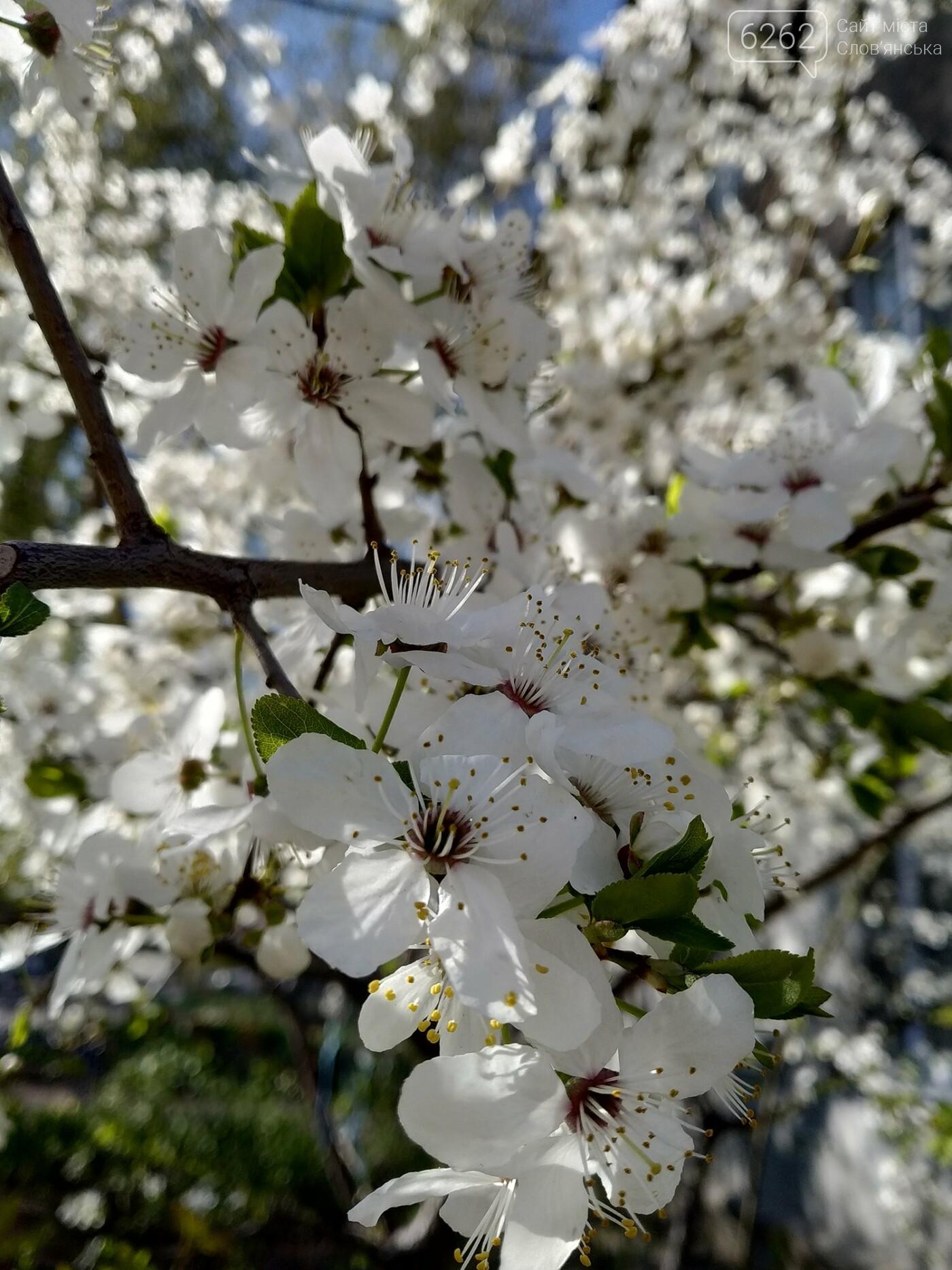 Весна дихає в обличчя: фотопрогулянка мікрорайоном Лісний у Слов'янську, фото-3