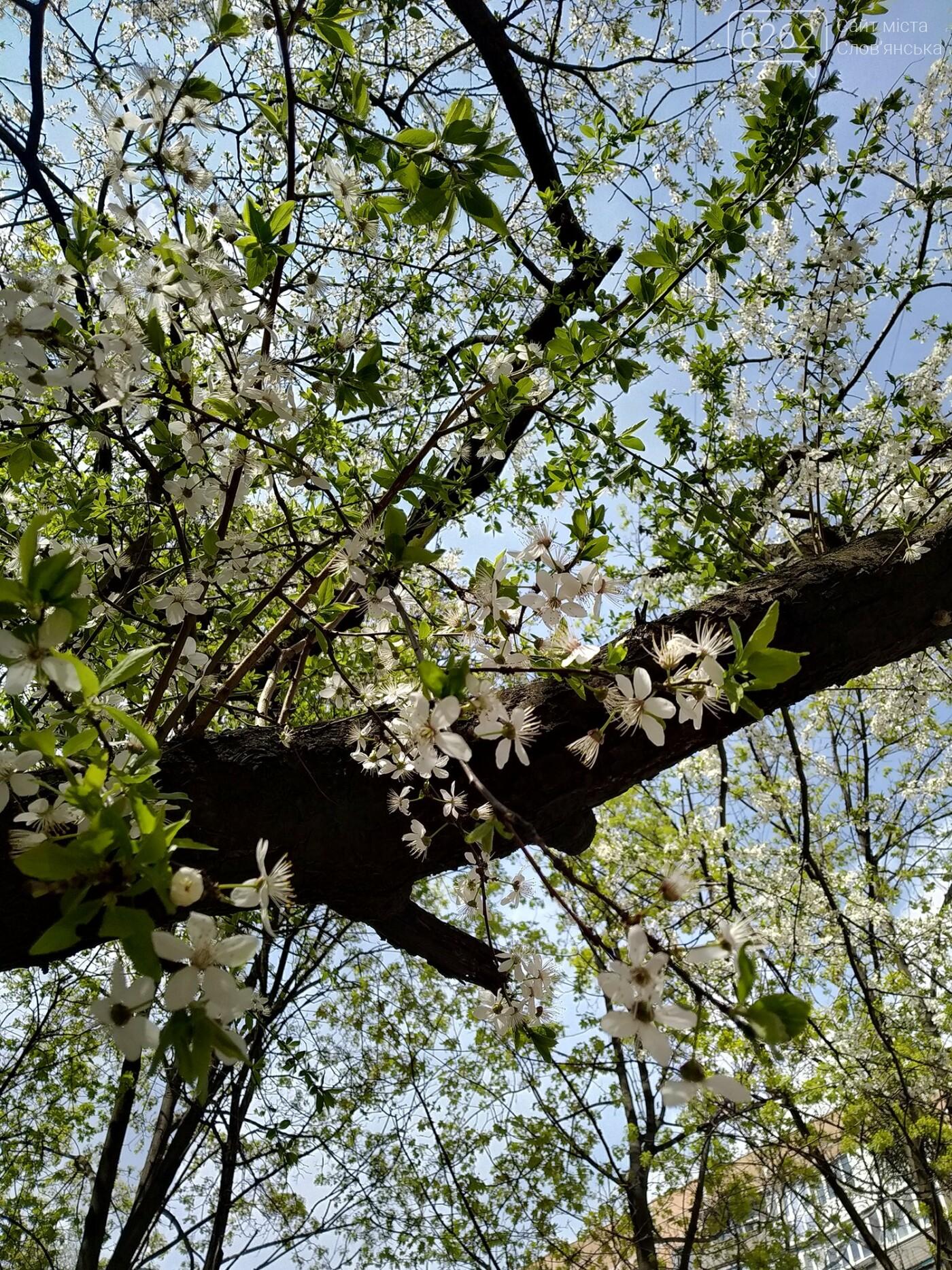 Весна дихає в обличчя: фотопрогулянка мікрорайоном Лісний у Слов'янську, фото-7