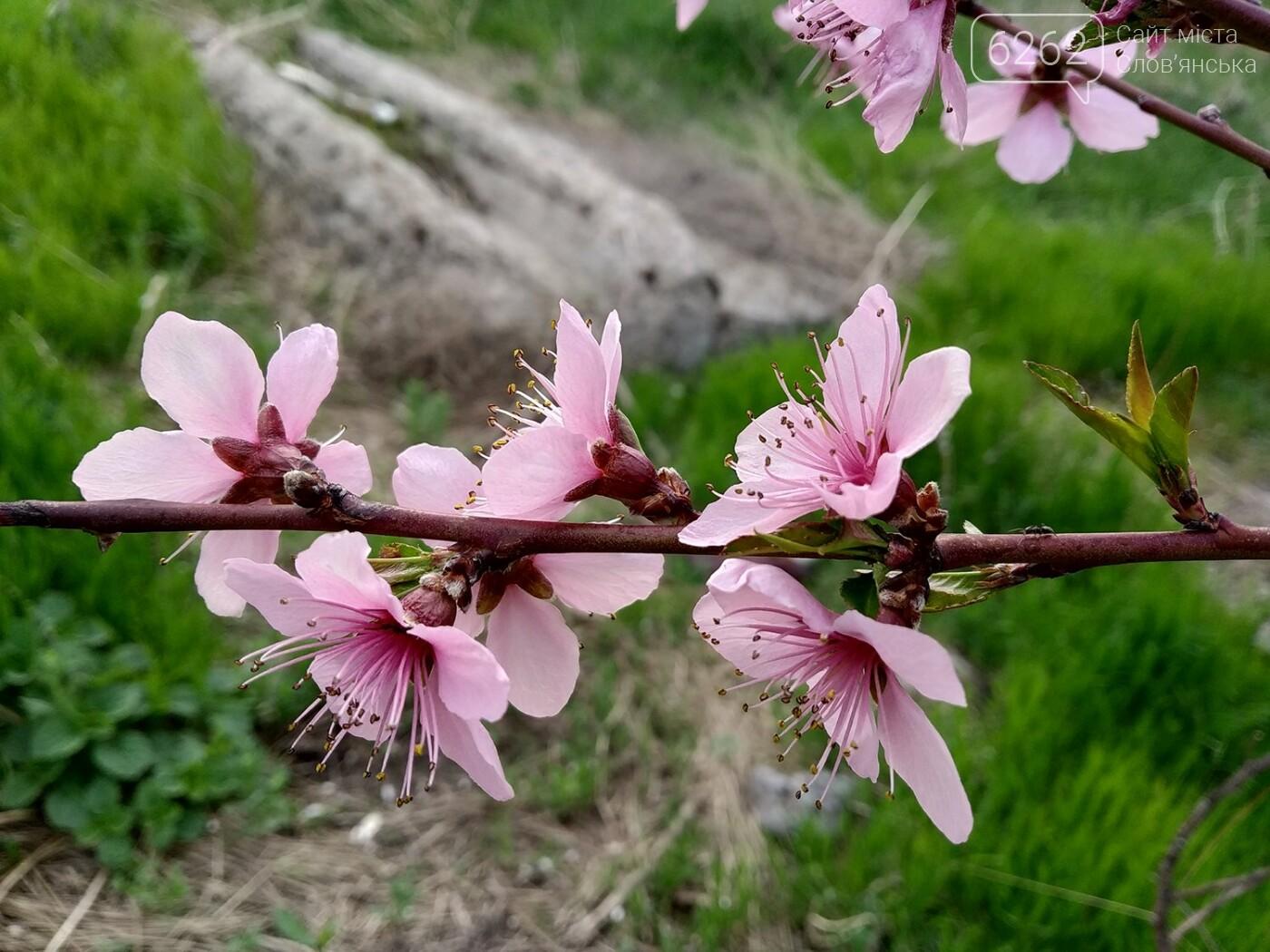 Весна дихає в обличчя: фотопрогулянка мікрорайоном Лісний у Слов'янську, фото-12
