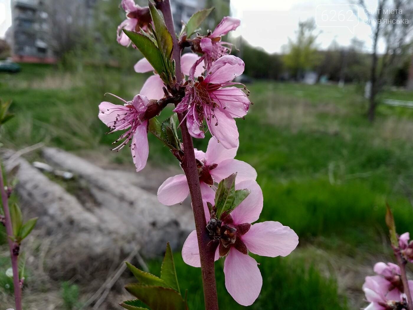 Весна дихає в обличчя: фотопрогулянка мікрорайоном Лісний у Слов'янську, фото-13
