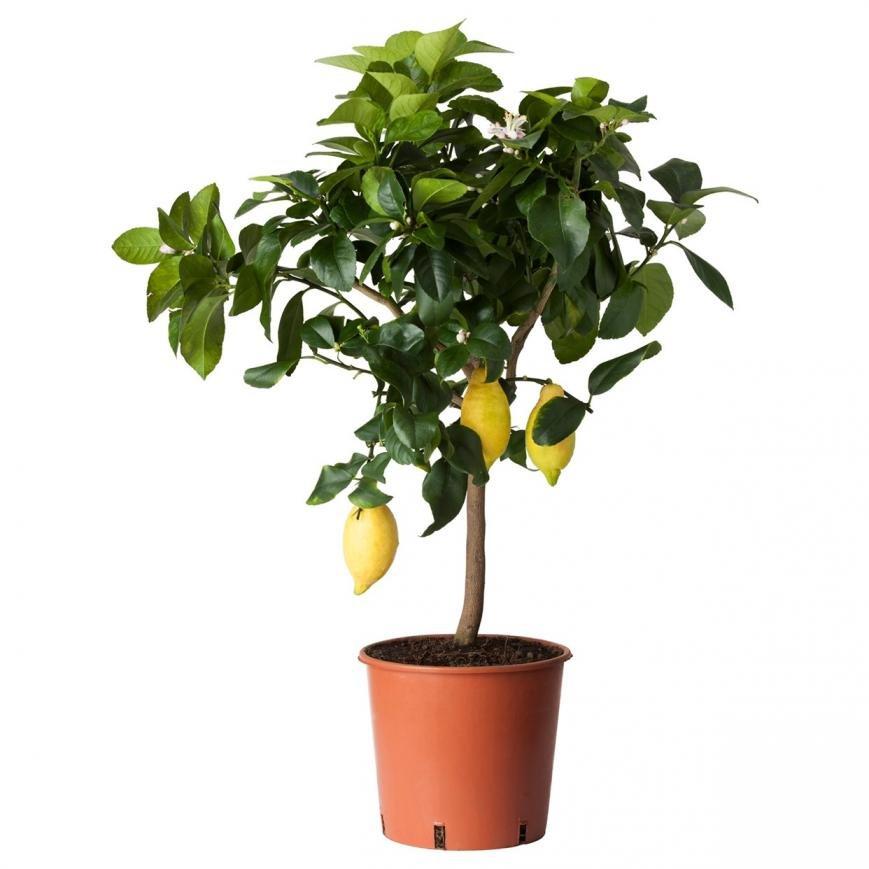 Комнатные растения, комнатные цветы, домашние растения, фото-3