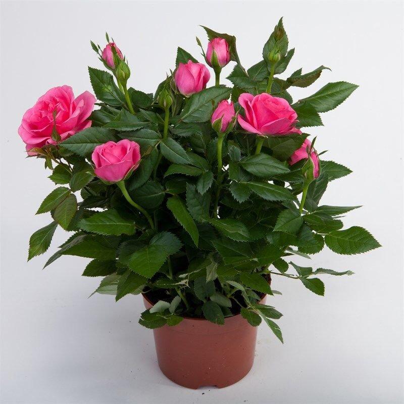 Комнатные растения, комнатные цветы, домашние растения, фото-1