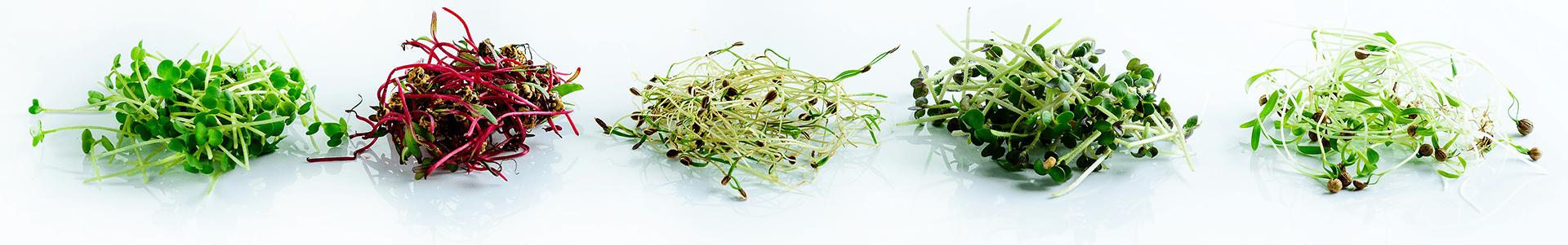 Смак мікрогріну , фото-1