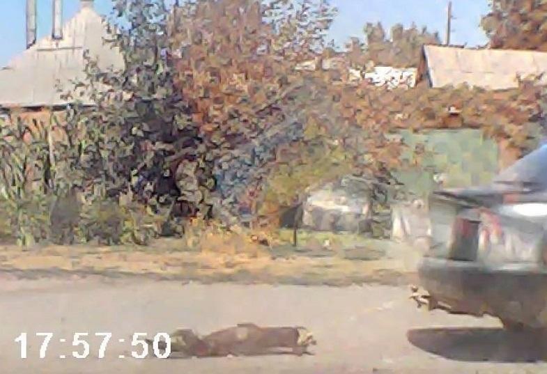 Мужчина, который жестоко обошелся с собакой в Славянске, предстанет перед судом , фото-1