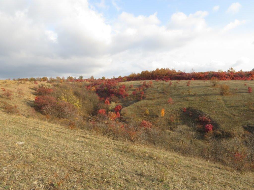 В Славянском районе два участка могут стать природными заказниками, фото-1