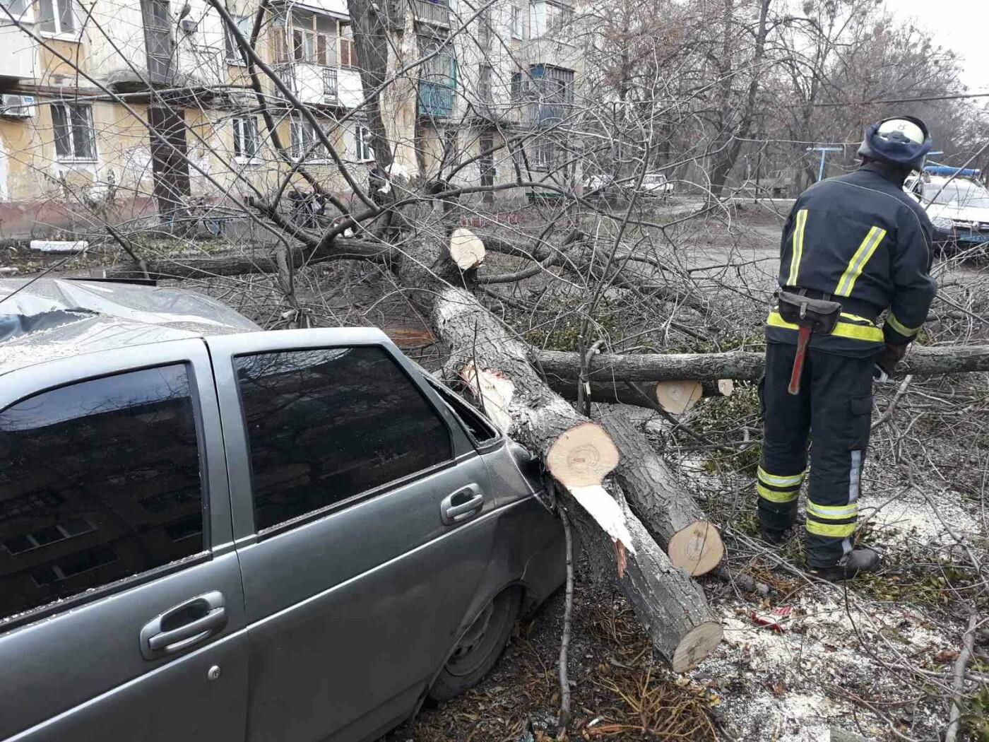 В Николаевке автомобиль привалило деревом, фото-1