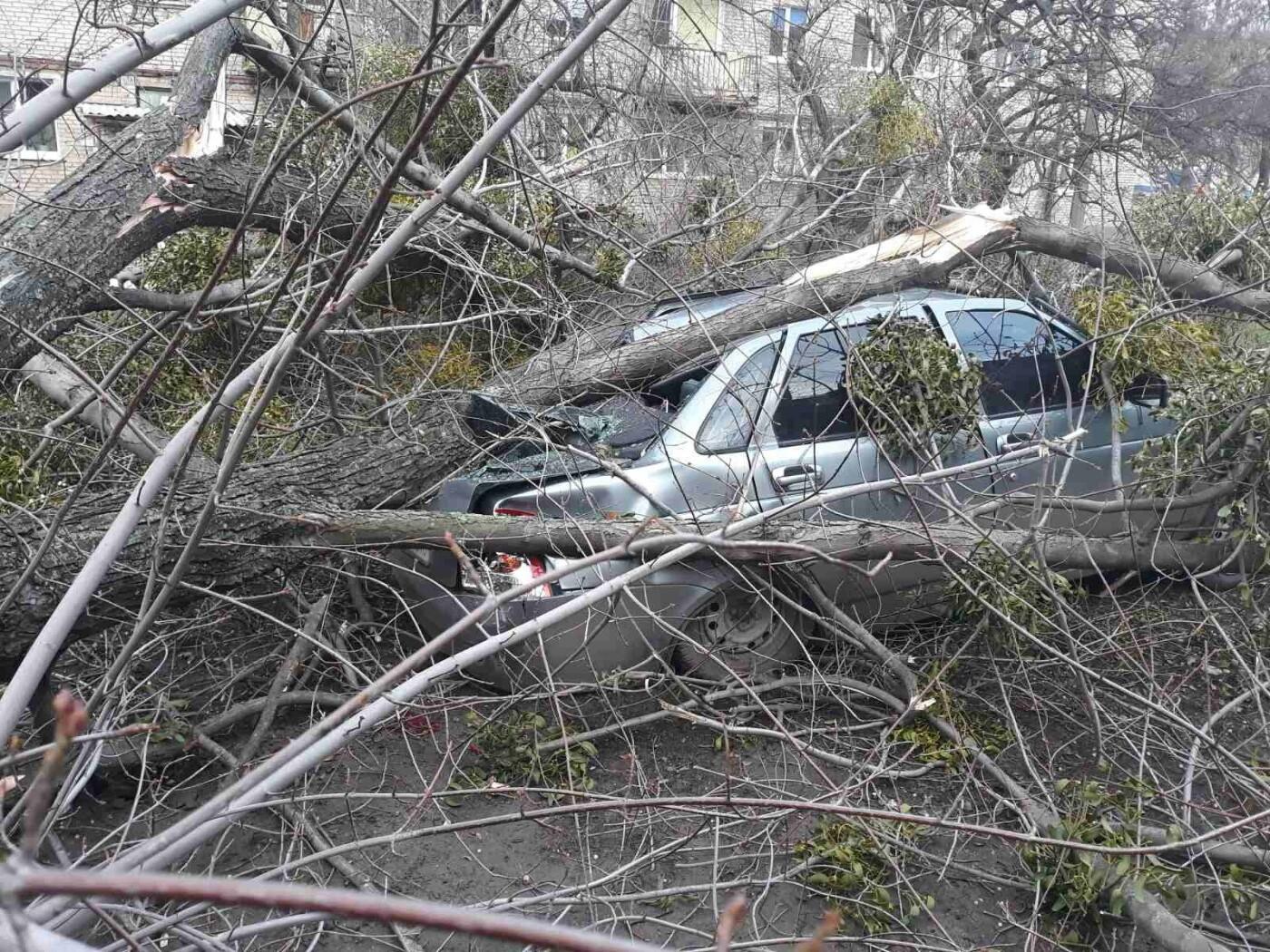 В Николаевке автомобиль привалило деревом, фото-2