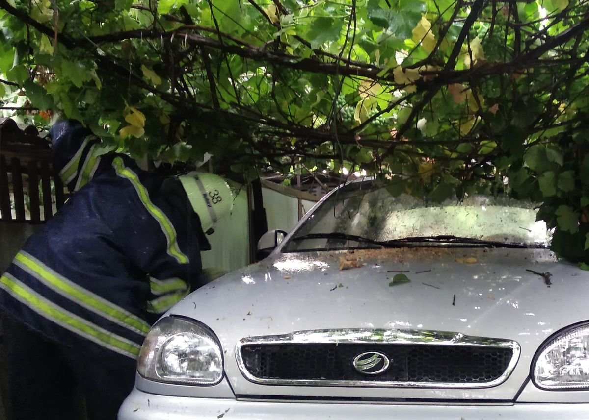 У Слов'янському районі дерево впало на автомобіль , фото-1