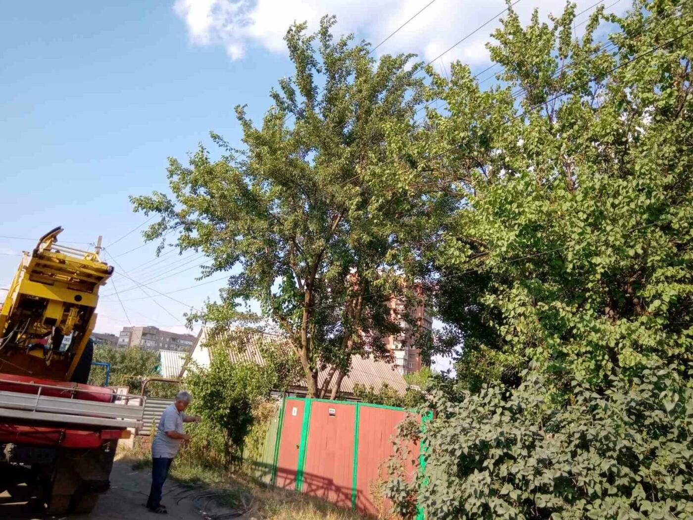 Винувата гілка шовковиці: у Слов'янську «стрибок» електроенергії спалив людям техніку, фото-3