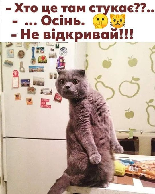 """""""Вот и лето прошло"""". Смішні картинки про кінець літа, фото-9"""