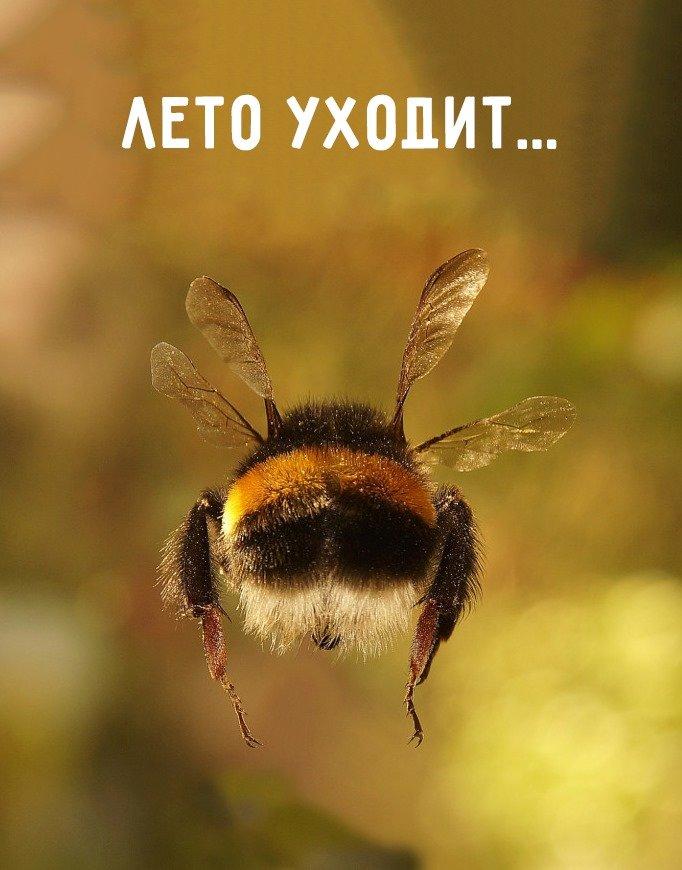 """""""Вот и лето прошло"""". Смішні картинки про кінець літа, фото-2"""