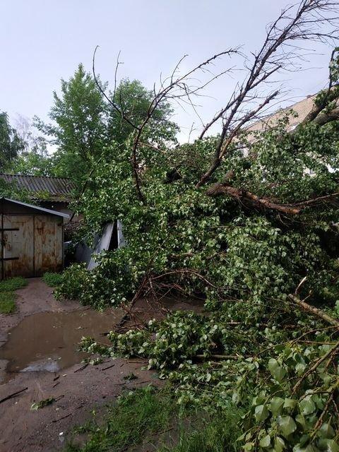 Наслідки негоди: У Слов'янську повалене дерево пошкодило вікна та балкони будинку, фото-2