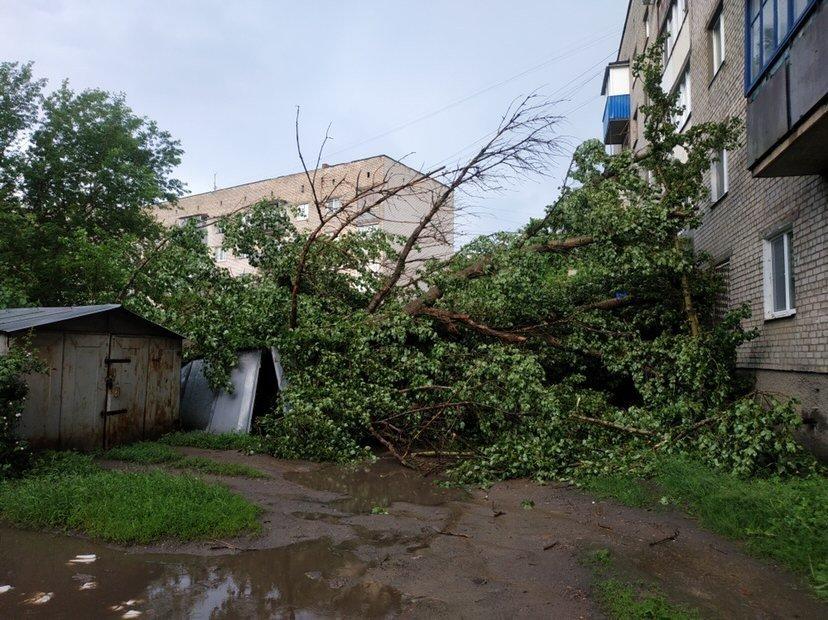 Наслідки негоди: У Слов'янську повалене дерево пошкодило вікна та балкони будинку, фото-1