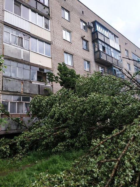 Наслідки негоди: У Слов'янську повалене дерево пошкодило вікна та балкони будинку, фото-3