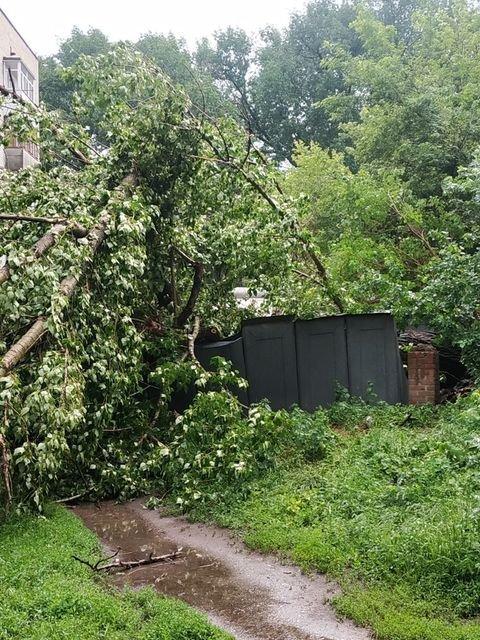 Наслідки негоди: У Слов'янську повалене дерево пошкодило вікна та балкони будинку, фото-4