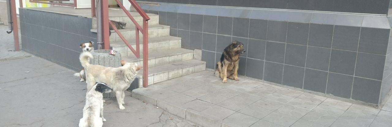 В этом году в Славянске простерилизовали 170 бездомных собак
